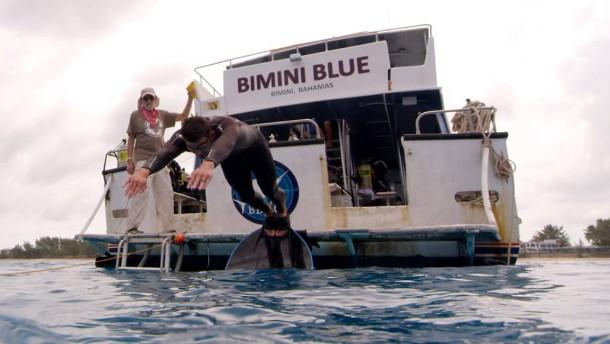 """Ärger nach """"Rennen"""" von Phelps gegen Hai"""
