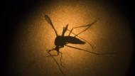 WHO sieht Olympia durch Zika nicht gefährdet