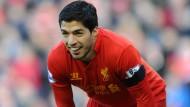 Der Fleischfresser des Strafraums: Luis Suarez vom FC Liverpool