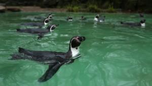 Nächster Todesfall im Dortmunder Zoo