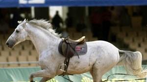 """Pferd unter dem Hintern weg verkauft"""