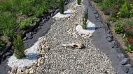 Für Bienchen nichts zu holen: Steingarten