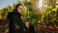 Weinlese auf dem Weingut Glaser-Himmelstoss.