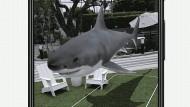 Der weiße Hai sucht in der Augmented Reality nach Wasser.