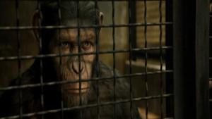 Sind wir bereit für die Rückkehr der Affen?