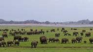 Um die Elefantenherde zu führen, sind zwei Stunden Schlaf genug.
