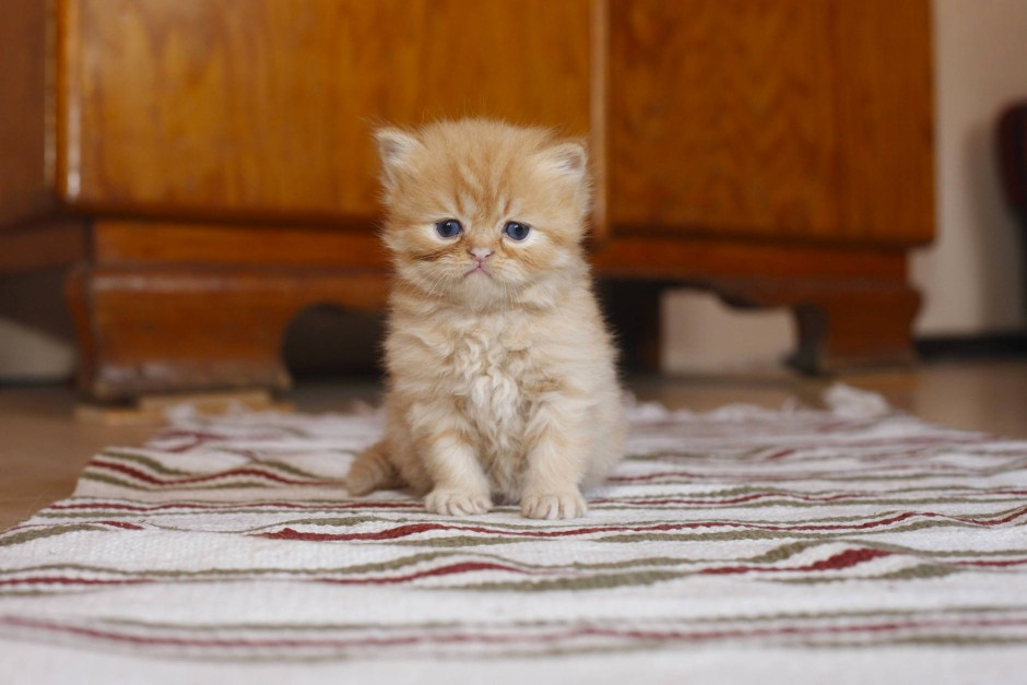 Darf man einer Katze etwas Butter geben? Haustiere, Katzen