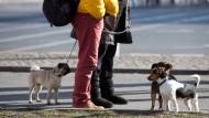 Ob im Internet oder auf der Straße: Die Informationen, die Hundehalter untereinander austauschen, sind für Versicherungskonzerne von Wert.