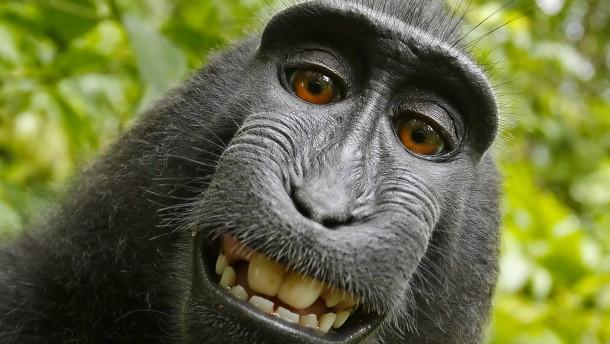 Gericht spricht Affen Urheberrecht an Selfie ab
