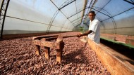 Kakaoproduktion in der Dominikanischen Republik