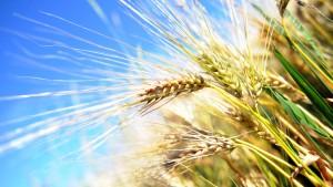 Ökonomen: Spekulation mit Lebensmitteln nicht verkehrt