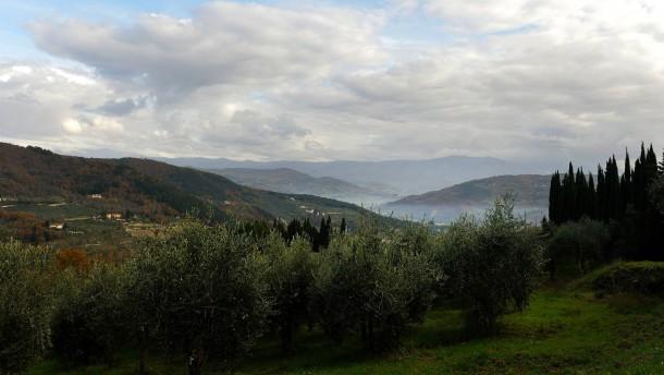Fliege vermiest Olivenbauern in Italien die Ernte