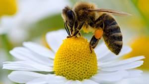 Kommission will Bienen schützen