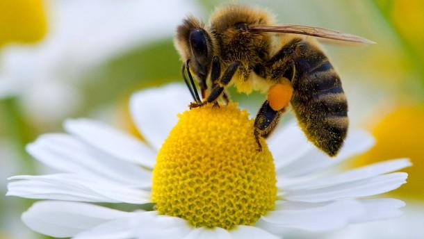 Bienenverluste durch Winterkälte und Milben