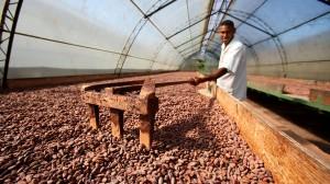 Ob die Kakao-Bohnen auch wirklich nachhaltig geerntet wurden?