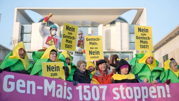 Deutschland räumt Weg für Genmais frei
