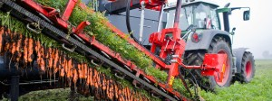 Ein Landwirt erntet Bio-Möhren auf einem Feld im Landkreis Hildesheim in Niedersachsen.