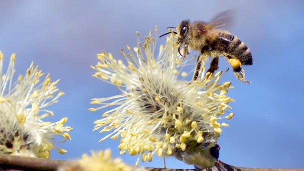 Stirbt die Biene wirklich?