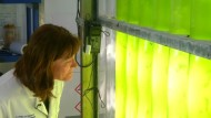 Sonnencreme aus Algen
