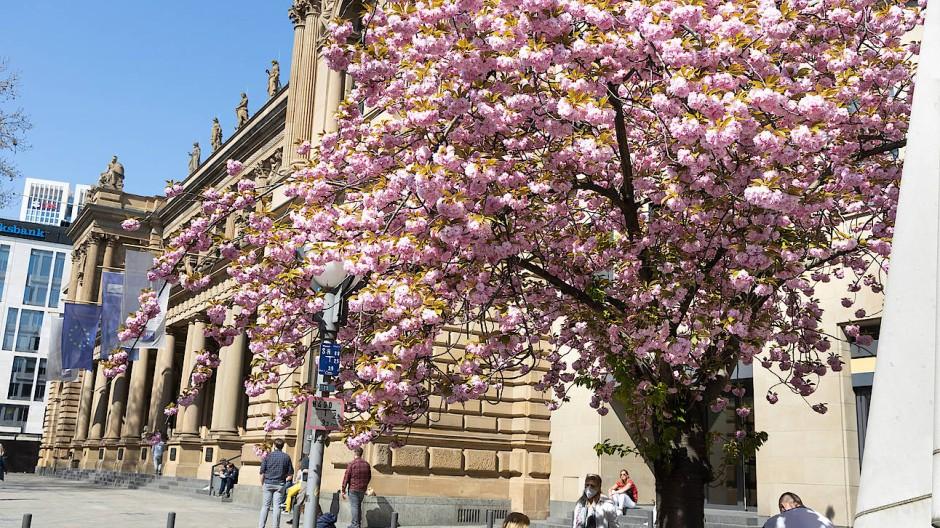 Die Frankfurter Börse im Frühling