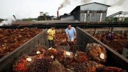 Das steckt hinter dem Palmöl-Streit mit Indonesien