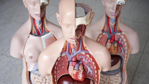 Neue Organspenderegel – würde die überhaupt helfen?