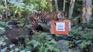 So geht Lotterie-Werbung: In Großbritannien halfen die Spieler dem Zoo in Edinburgh bei der Anschaffung eines Sumatra-Tigers.