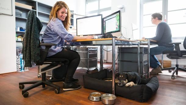 Soll der Hund ins Büro?