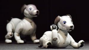 Sony ist auf den Hund gekommen