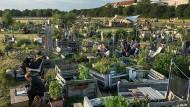 Wenn es nur so einfach wäre: urbanes Gärtnern auf dem früheren Tempelhofer Flugfeld in Berlin.
