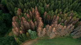 Problemfall Wald