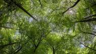 Der Zwist um den Wald