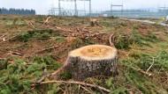 Gefällt für die Energiewende: Baumstumpf an einer Starkstromtrasse