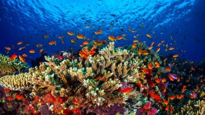 Australien warnt vor dem Ende des Great Barrier Reef