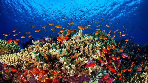 Australien warnt vor dem Ende des Great Barrier Reef
