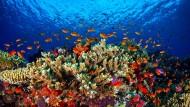 Ein undatiertes Foto zeigt das Leben im Great Barrier Reef vor der Küste von Queensland, Australien.