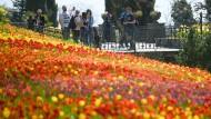 Touristen auf der Blumeninsel