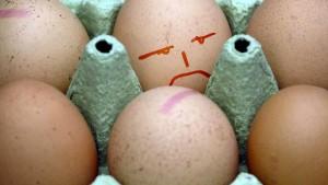Ermittlungen gegen deutsche Landwirte im Eier-Skandal