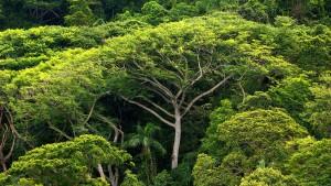 Minister Müller setzt auf Waldschutz für das Klima