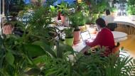 """Arbeitsplätze voller Grünpflanzen gibt's wirklich: Co-Working-Space """"Second Home"""" in Lissabon"""