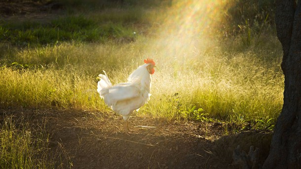 Wie wir dem Häuptling vergeblich ein Huhn schenken wollten
