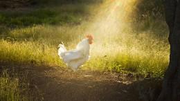 Wie wir vergeblich versuchten, dem Häuptling ein Huhn zu schenken