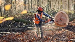 Es wird eng für den Hambacher Forst