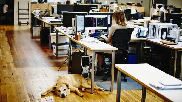 Kuschelfaktor im Büro