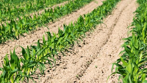 Zeit für eine echte Agrarreform