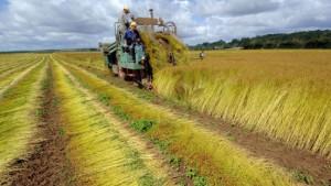 EU bietet niedrigere Agrarzölle an