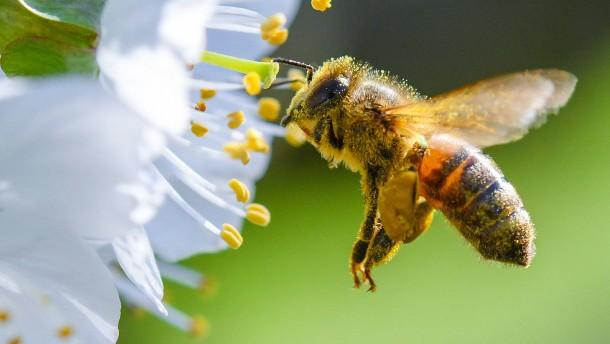 EU verbietet bienengefährdende Wirkstoffe