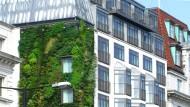 Ein Mittel für ein besseres Stadtklima: Fassadenbegrünung