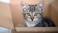 Steuern sparen mit der Katze
