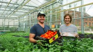 Barsche und Tomaten für die Hauptstadt
